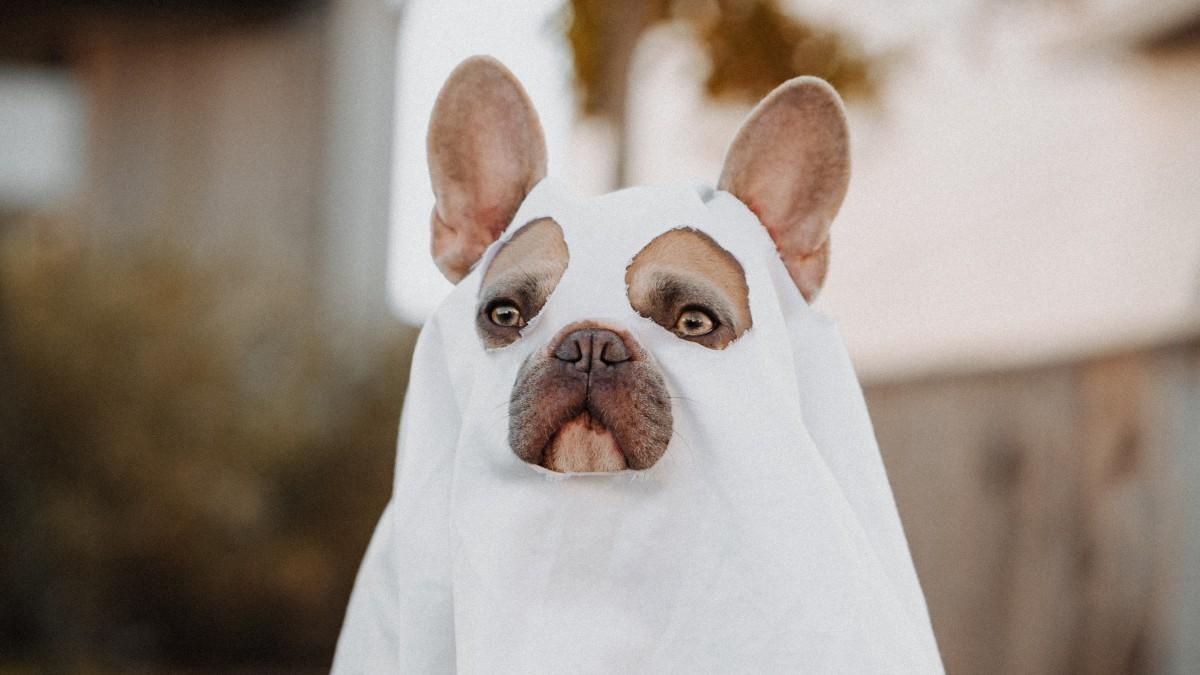 Maak zelf je Halloween kostuum