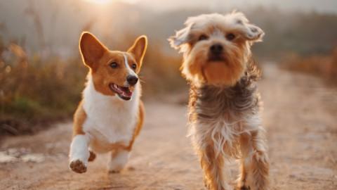 Honden los in Ermelosche Heide
