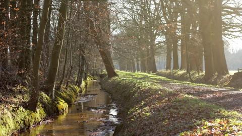 Wandel virtueel door Nederlands mooiste natuurgebieden