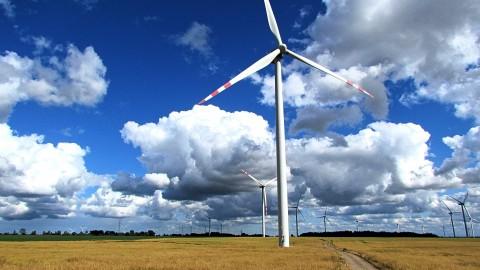 Provincie: geen windmolens in Oostvaardersplassen
