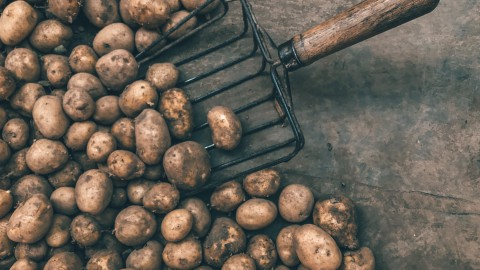 Kabinet trekt 650 miljoen uit voor steun frietaardappelboeren en sierteelt