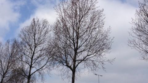 Tweede Paasdag: Vrij koud met wolkenvelden en af en toe zon.