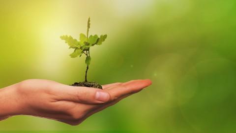 160.000 jonge bomen geplant in Horsterwold