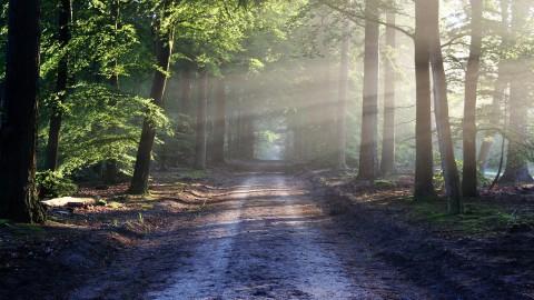 Staatsbosbeheer: mijd dit weekend natuurgebieden